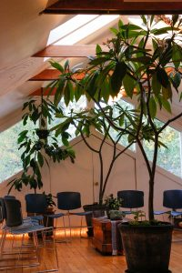 Potted trees and a circle of chairs in a sunlit room with vaulted ceilings and skylights.